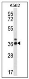 AP53729PU-N - RPP38