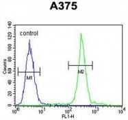 AP50248PU-N - ARL8A / ARL10B