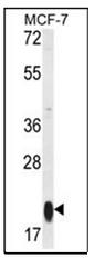 AP53758PU-N - MRPS25