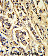 AP54510PU-N - CD309 / VEGFR-2 / Flk-1
