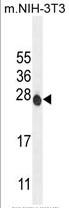 AP50304PU-N - ATP6V0C