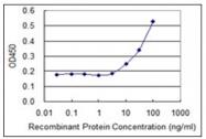 AM31962PU-N - Cytochrome b5