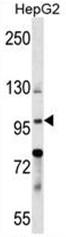 AP50381PU-N - BNC1
