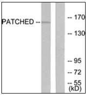 AP31827PU-N - PTCH1