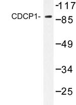 AP06754PU-N - CD318 / CDCP1