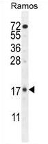 AP54404PU-N - TTC9C