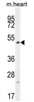 AP54386PU-N - TSPYL4