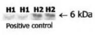 AP02205PU-S - Relaxin 2 / RLN2