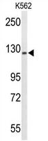 AP54355PU-N - TRERF1