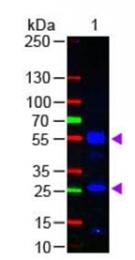 R1388F - Human IgG