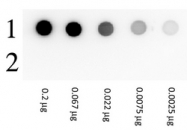 RA104GAL - Biotin
