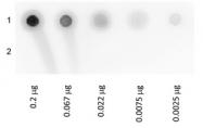 RA104GLU - Biotin