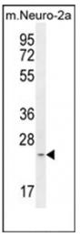 AP53760PU-N - MRPS34