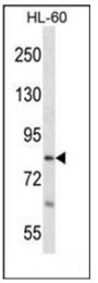AP53763PU-N - RTF1