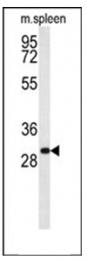 AP53767PU-N - RTP1