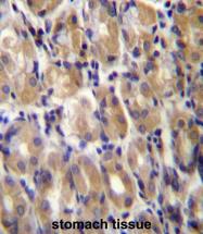 AP54336PU-N - Torsin-1B (TOR1B)