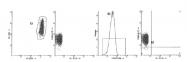 AM39023RP-N - CD55 / DAF