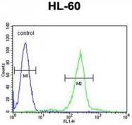 AP50563PU-N - C1q C subunit