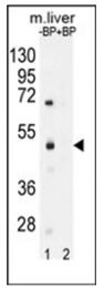 AP53793PU-N - SAMD8 / SMSr