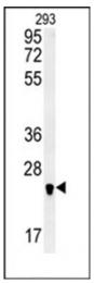 AP53796PU-N - SAR1B