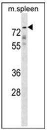 AP51901PU-N - GPC2