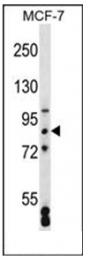 AP53802PU-N - SATB2