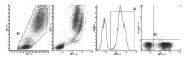 AM39035FC-N - Myeloperoxidase