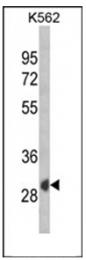 AP53873PU-N - SFRP1