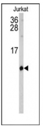 AP53896PU-N - SH2D1B / EAT2