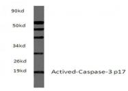 AP21048PU-N - Caspase-3