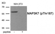 AP55856PU-S - TAK1 / MAP3K7