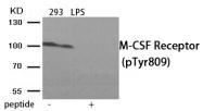 AP55862PU-S - CD115