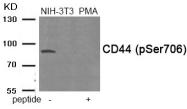 AP55867PU-S - CD44