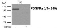 AP55868PU-N - CD140a / PDGFRA