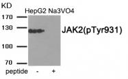 AP55887PU-S - Tyrosine-protein kinase JAK2