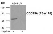 AP55900PU-S - CDC25A