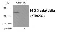 AP55906PU-N - 14-3-3 protein zeta/delta