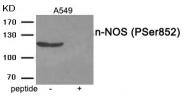 AP55924PU-N - NOS1