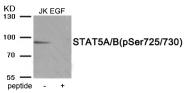 AP55926PU-S - STAT5A / STAT5B