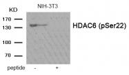 AP55932PU-S - HDAC6