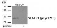 AP55933PU-S - VEGFR-1 / Flt-1
