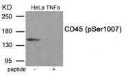 AP55940PU-S - CD45 / LCA