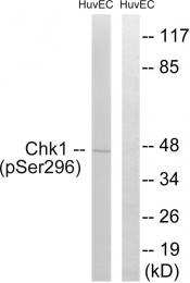 AP55707PU-S - CHK1
