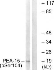 AP55709PU-S - PEA15