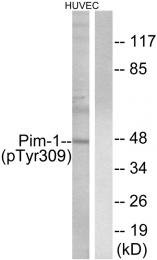 AP55710PU-S - PIM1
