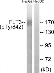 AP55755PU-S - CD135 / FLT3