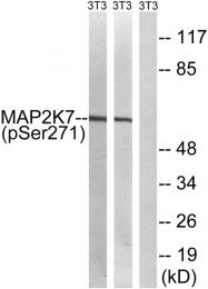 AP55764PU-S - MAP2K7