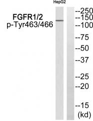 AP55791PU-S - FGFR1 / FGFR2