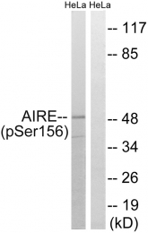AP55800PU-S - AIRE / APECED