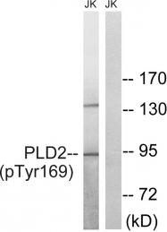 AP55830PU-N - PLD2